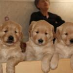 Lola, Shaw, Bucky